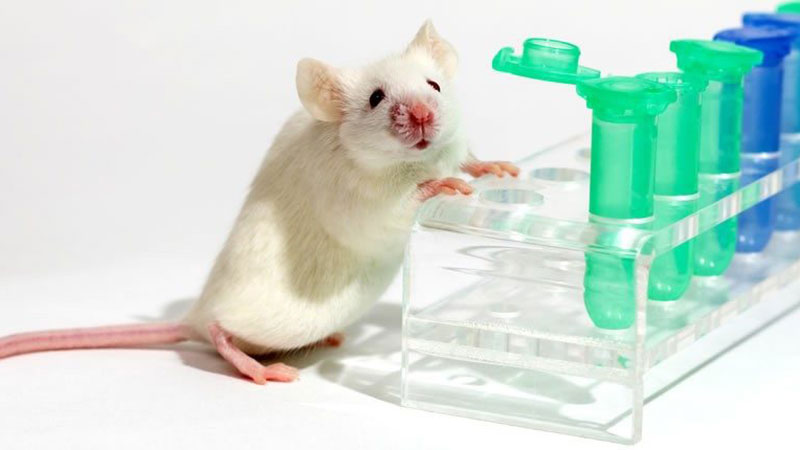 White mouse with test tubes